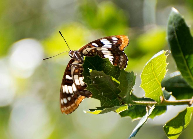 Butterfly_DSC_5461