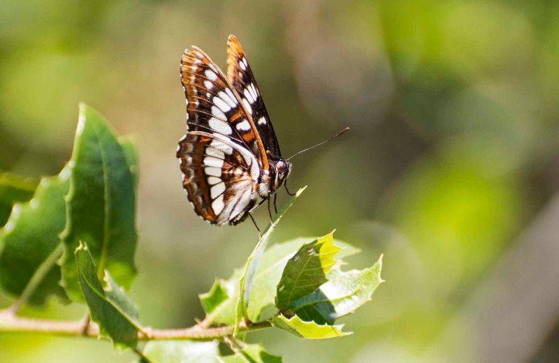Butterfly_DSC_5474