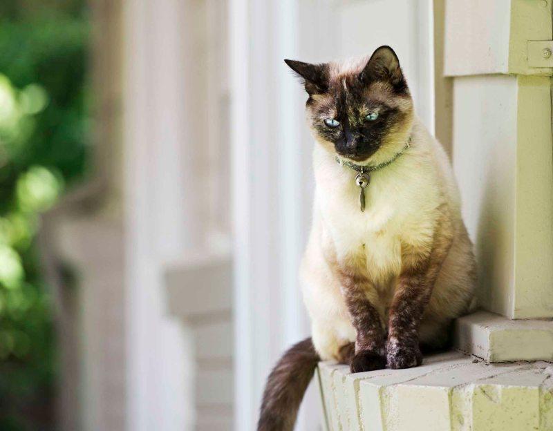 Cat_DSC_4996