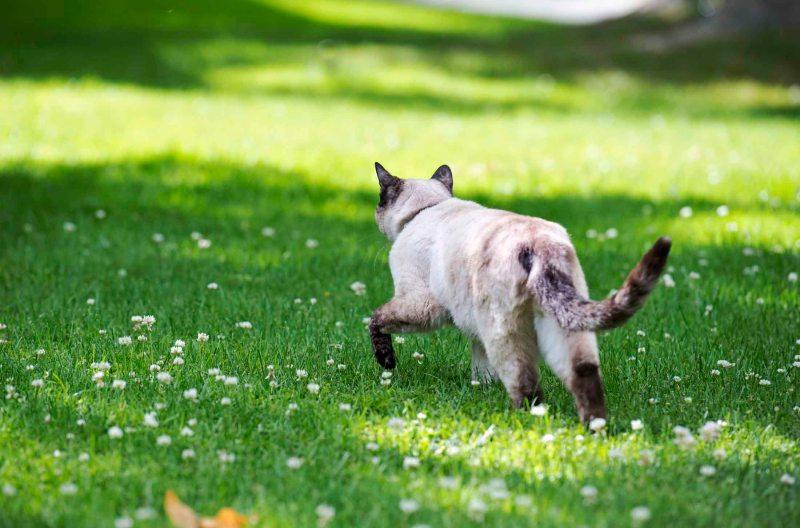 Cat_DSC_5000