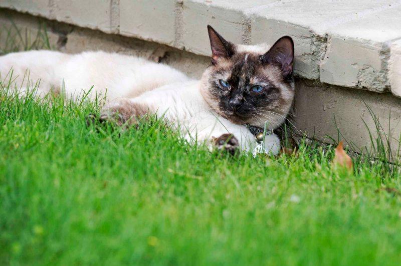 Cat_DSC_5007
