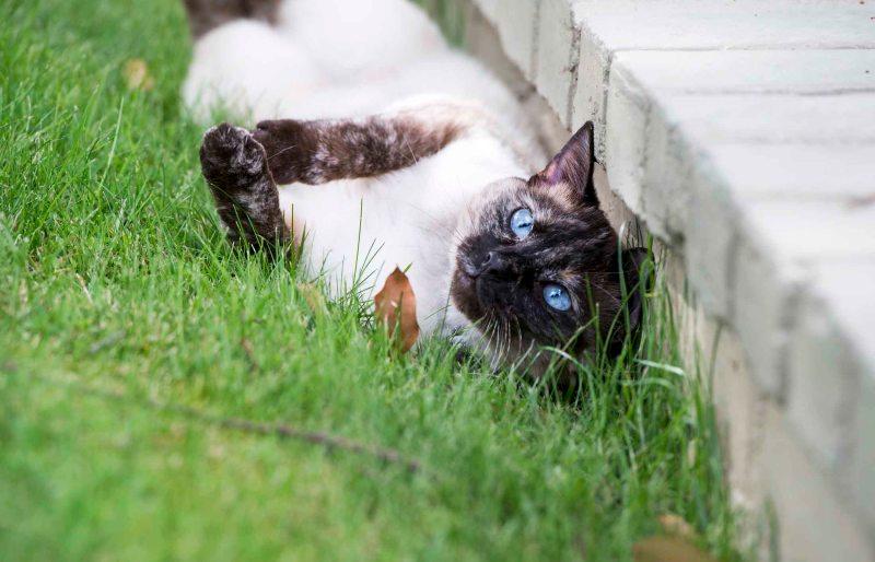 Cat_DSC_5012