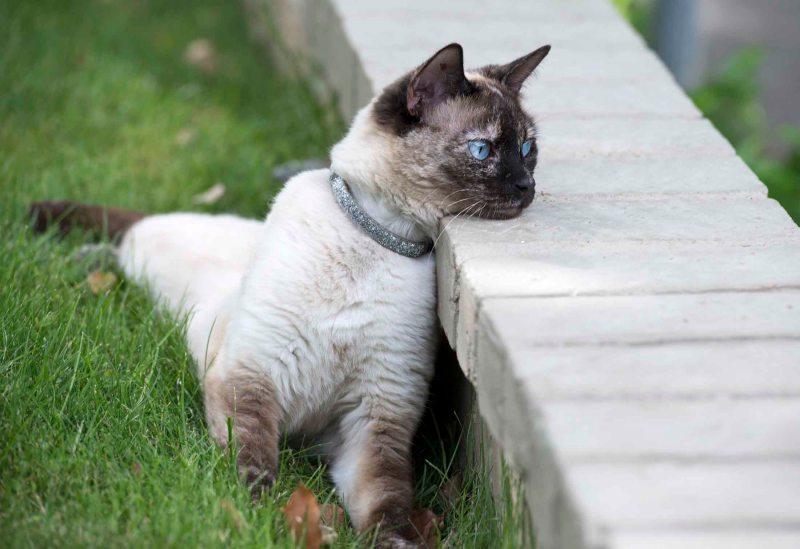 Cat_DSC_5018