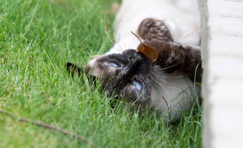 Cat_DSC_5022