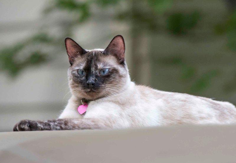 Cat_DSC_5649