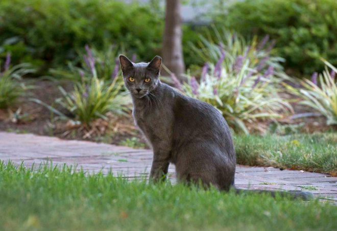 Cat_DSC_5657