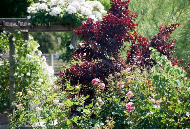 Garden_DSC_5508