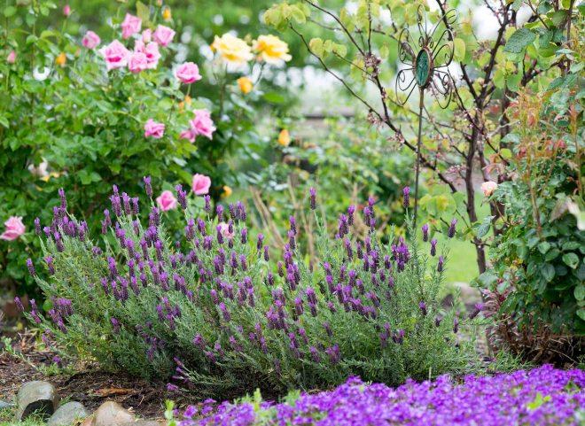 Garden_Rain_DSC_4588