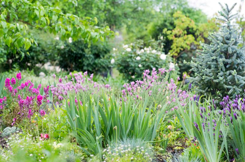 Garden_Rain_DSC_4593