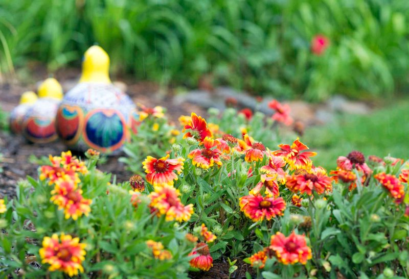 Garden_Rain_DSC_4594
