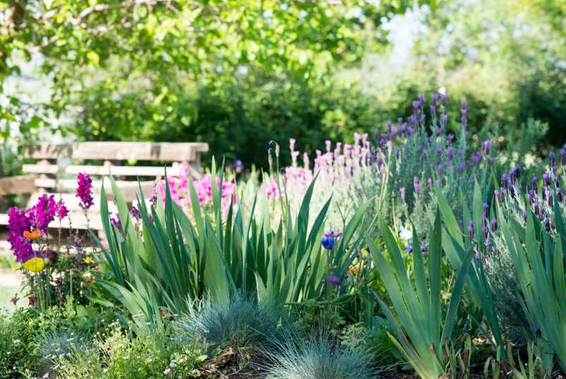 Garden_Spring_DSC_4178