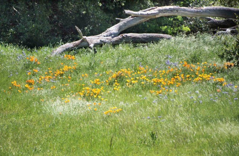 Meadow_DSC_5484