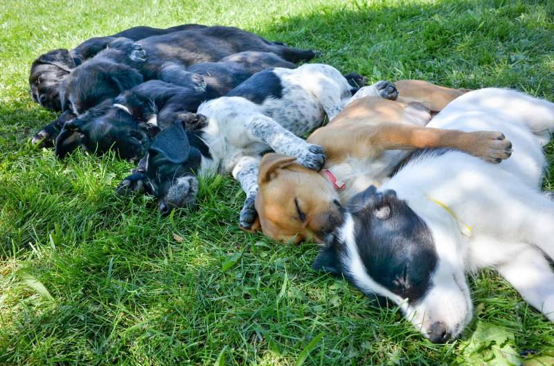 Puppies_Sleeping_DSC_0190