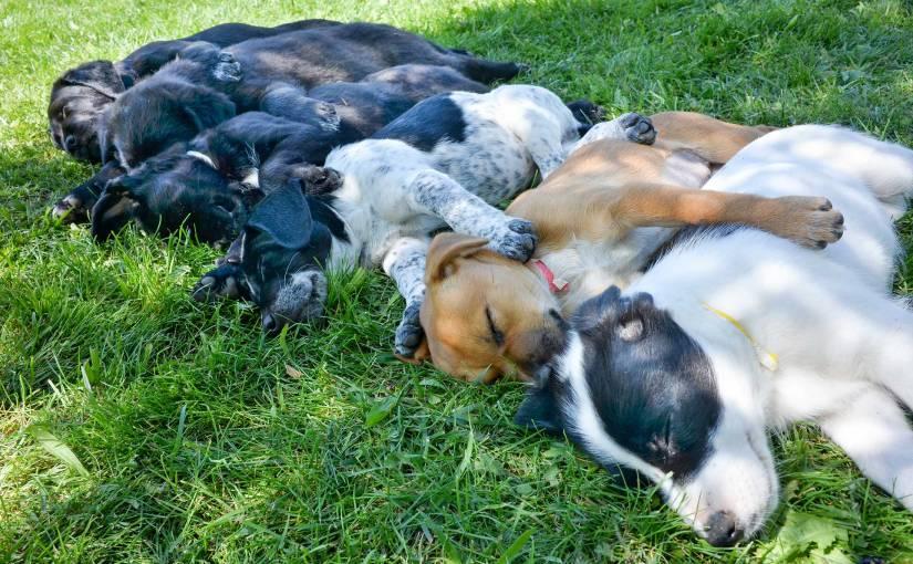 Wordless Wednesday: PoopedPuppies