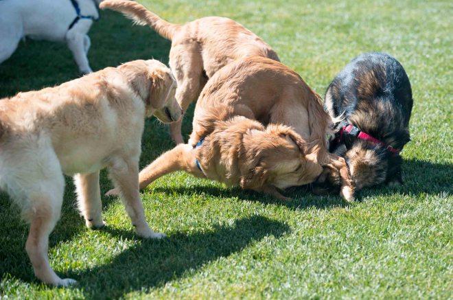 Puppy School_DSC_5307