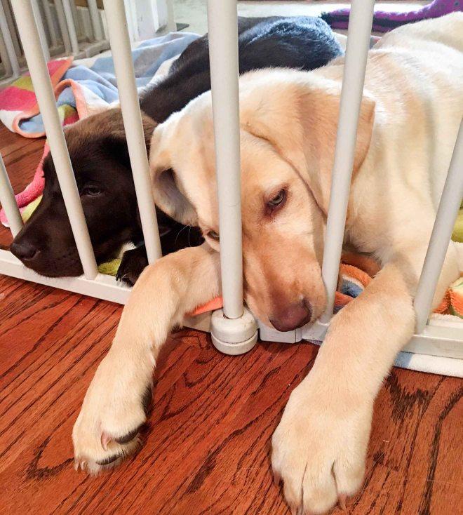 Dog Tired Faith Tootsie