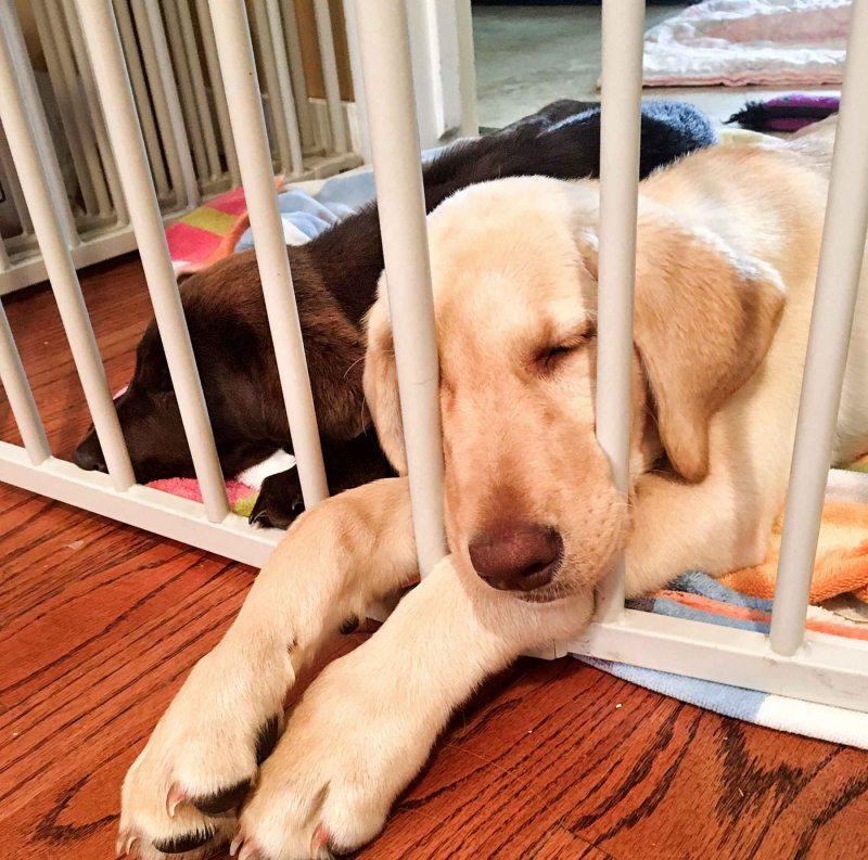 Faith Tootsie Sleeping