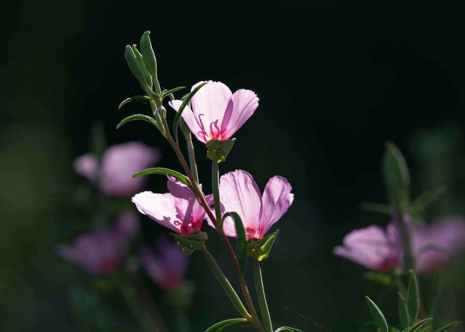 Flower_Sunlit_DSC_6869