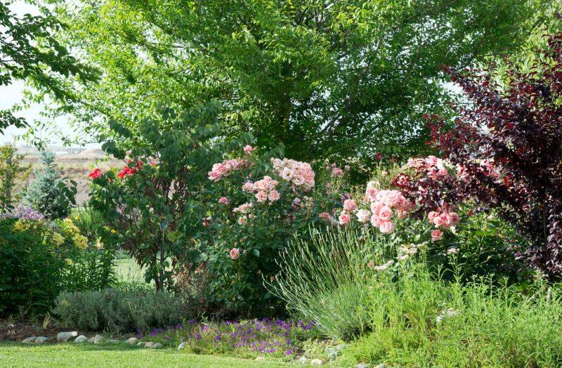 Garden_DSC_6239