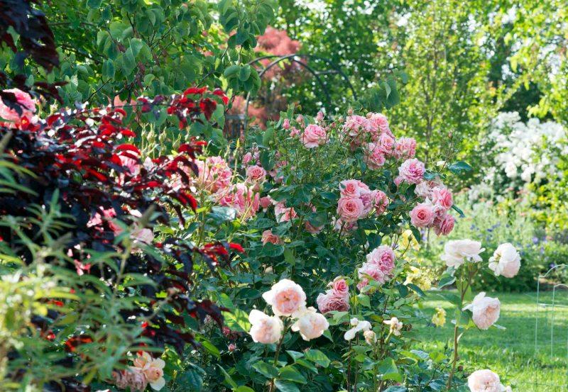 Garden_DSC_6241