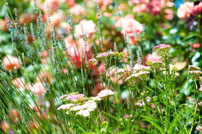 Garden_DSC_6685