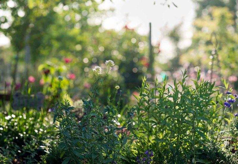 Garden_Evening_DSC_6836