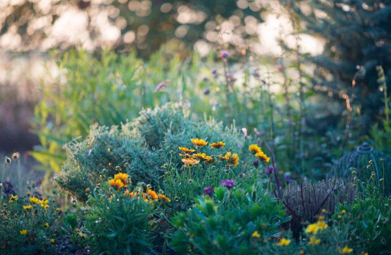 Garden_Evening_DSC_6853