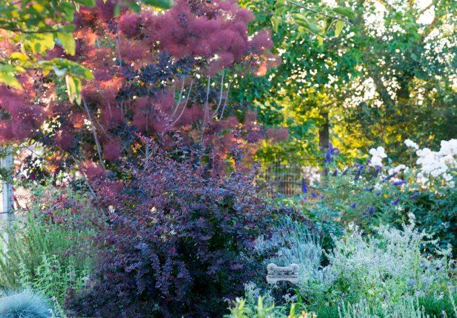 Garden_Sunset_DSC_6744