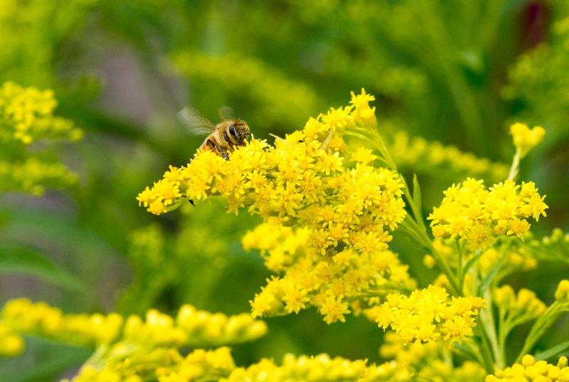 Bee_Detail_DSC_7700