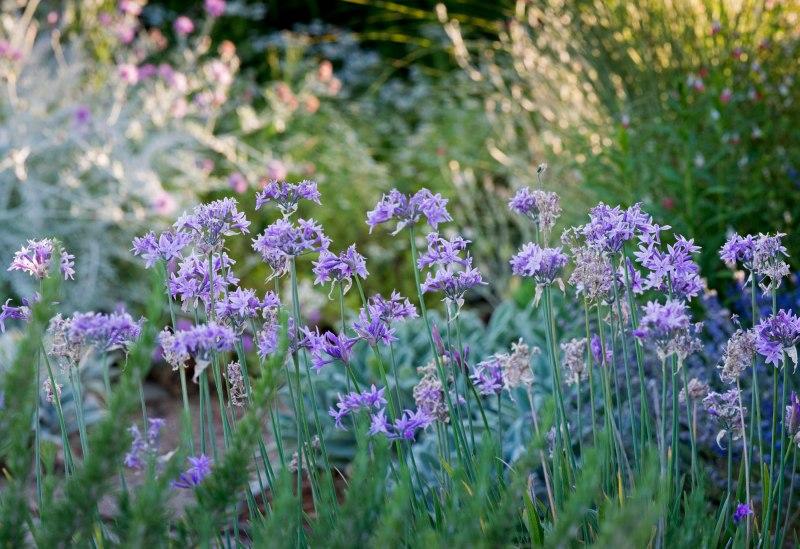 Cottage_Garden_DSC_0437