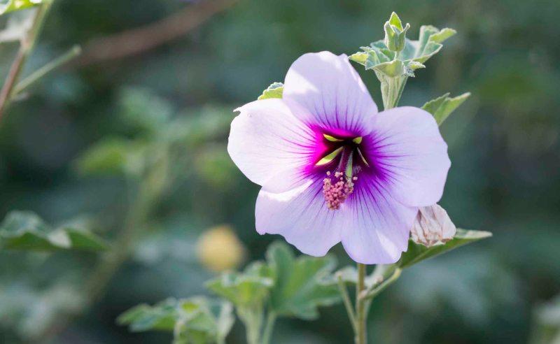Flower_DSC_8223
