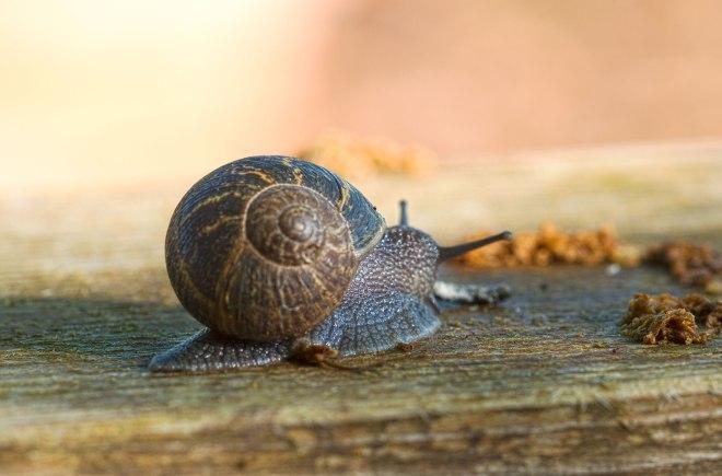 Snail_DSC_4461