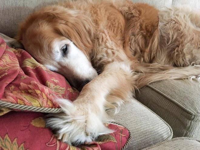 Bella_Couch_IMG_0417