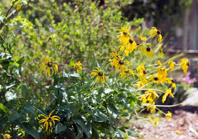 Garden_July_DSC_8693