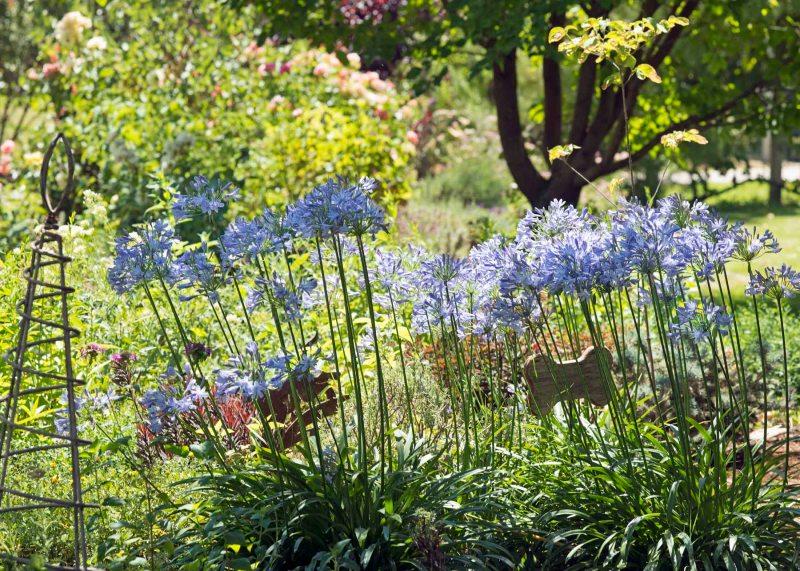 Garden_July_DSC_8703