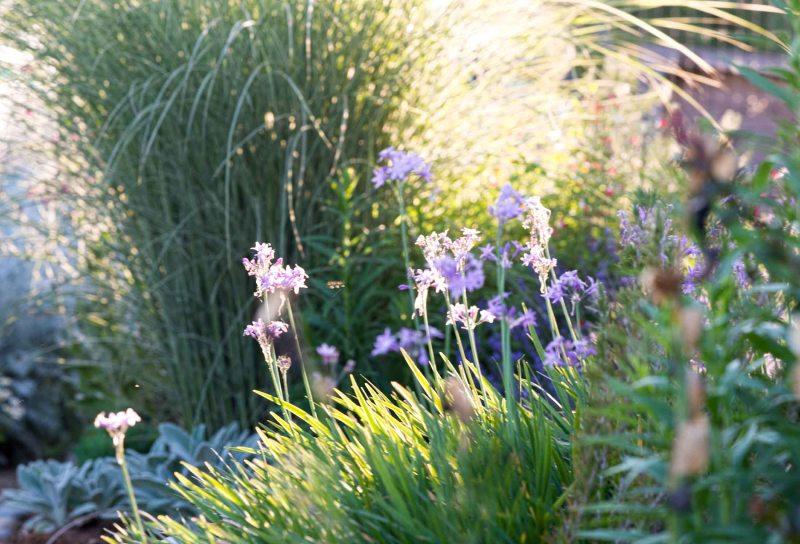 Garden_Sunset_DSC_6578