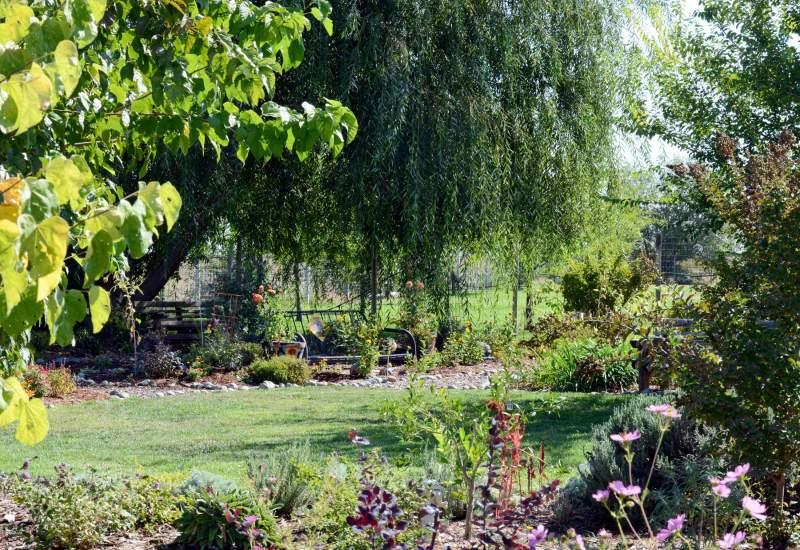 Garden_Willow_DSC_3969