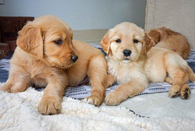 Molly_Puppies_DSC_0595_1