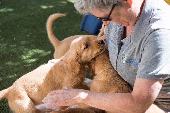 Mollys Puppies_DSC_6575