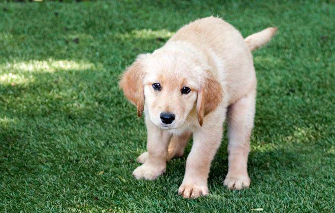 Mollys Puppies_DSC_6663