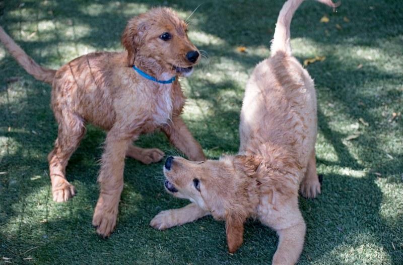 Puppies_DSC_7112