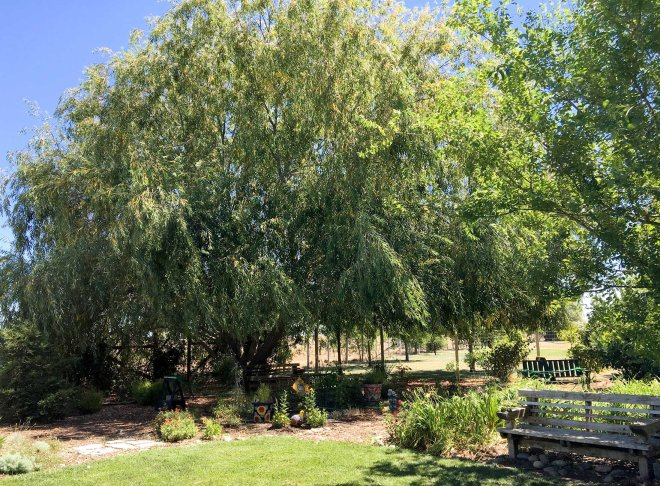 Willow_IMG_0382