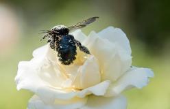 Busy_Bee_DSC_0055