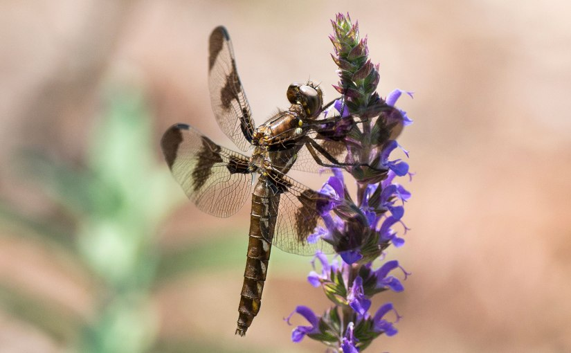 Dragonfly: Suit ofArmor