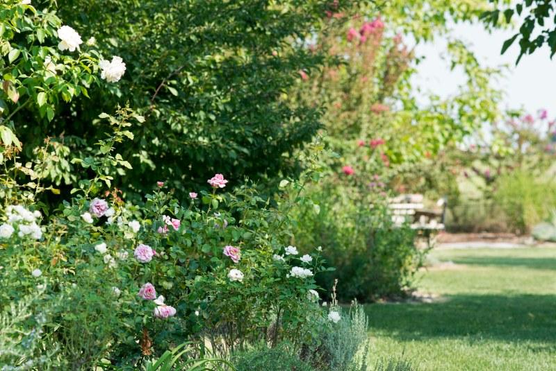 Garden_August_DSC_9943