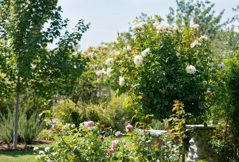 Garden_White_DSC_9999