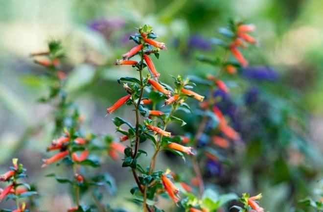 Hummingbird Bed_DSC_9918