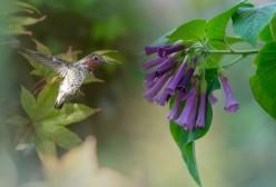 Hummingbird1_DSC_9239
