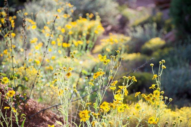 desert-flowers_dsc_1524