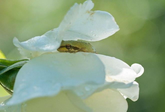 frog_dsc_1728